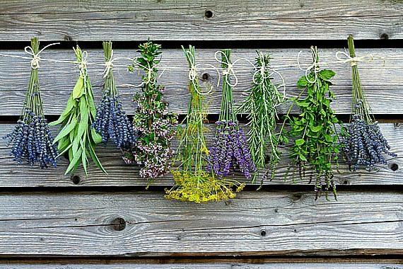Microwave Dried Herbs Recipe   HeyFood — heyfoodapp.com