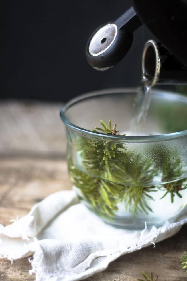 Healing Conifer Tea Recipe | HeyFood — heyfoodapp.com